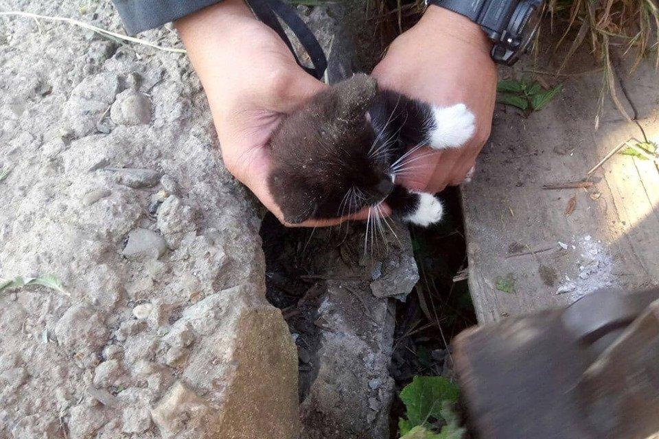 Допомога чотирилапим: Закарпатські рятувальники визволили кошеня, що застрягло у кам'яній брилі (ФОТО), фото-3