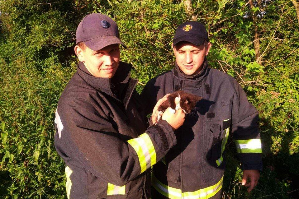 Допомога чотирилапим: Закарпатські рятувальники визволили кошеня, що застрягло у кам'яній брилі (ФОТО), фото-1