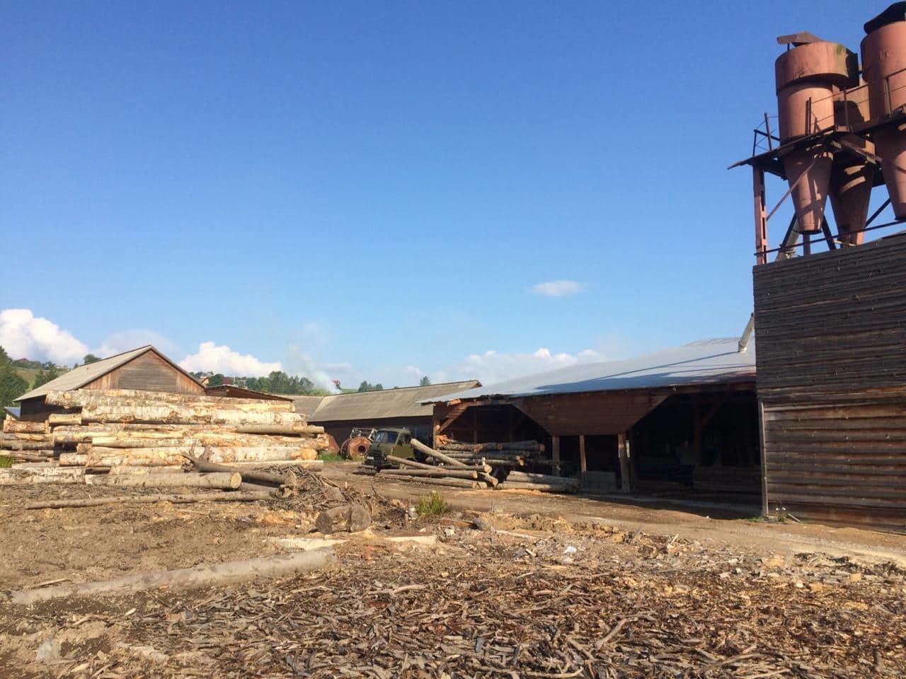 На Закарпатті СБУ викрило лісництво на розкраданні деревини - лісничому оголосили підозру (ФОТО), фото-2