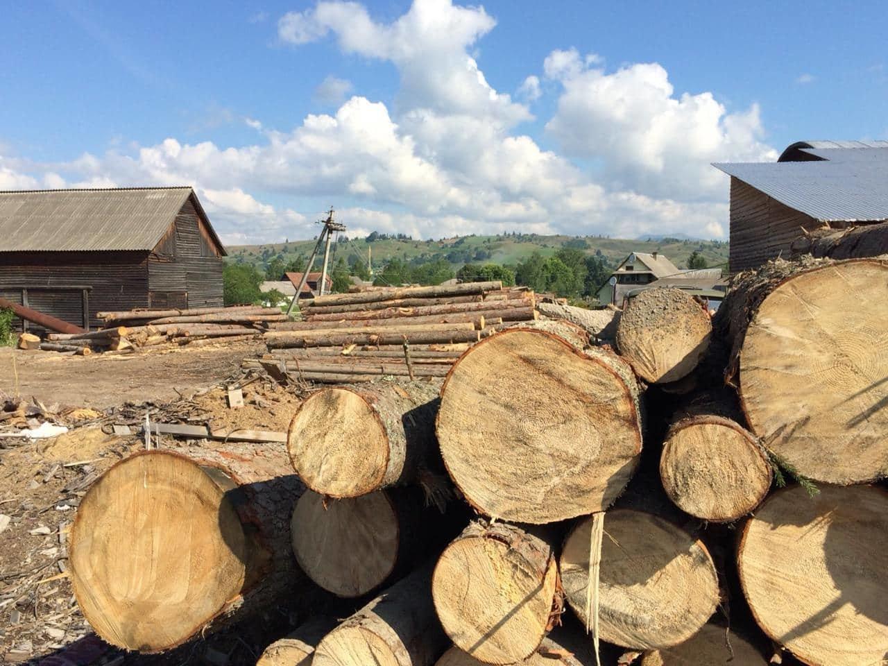 На Закарпатті СБУ викрило лісництво на розкраданні деревини - лісничому оголосили підозру (ФОТО), фото-4
