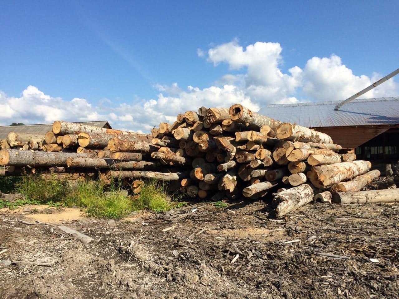 На Закарпатті СБУ викрило лісництво на розкраданні деревини - лісничому оголосили підозру (ФОТО), фото-1
