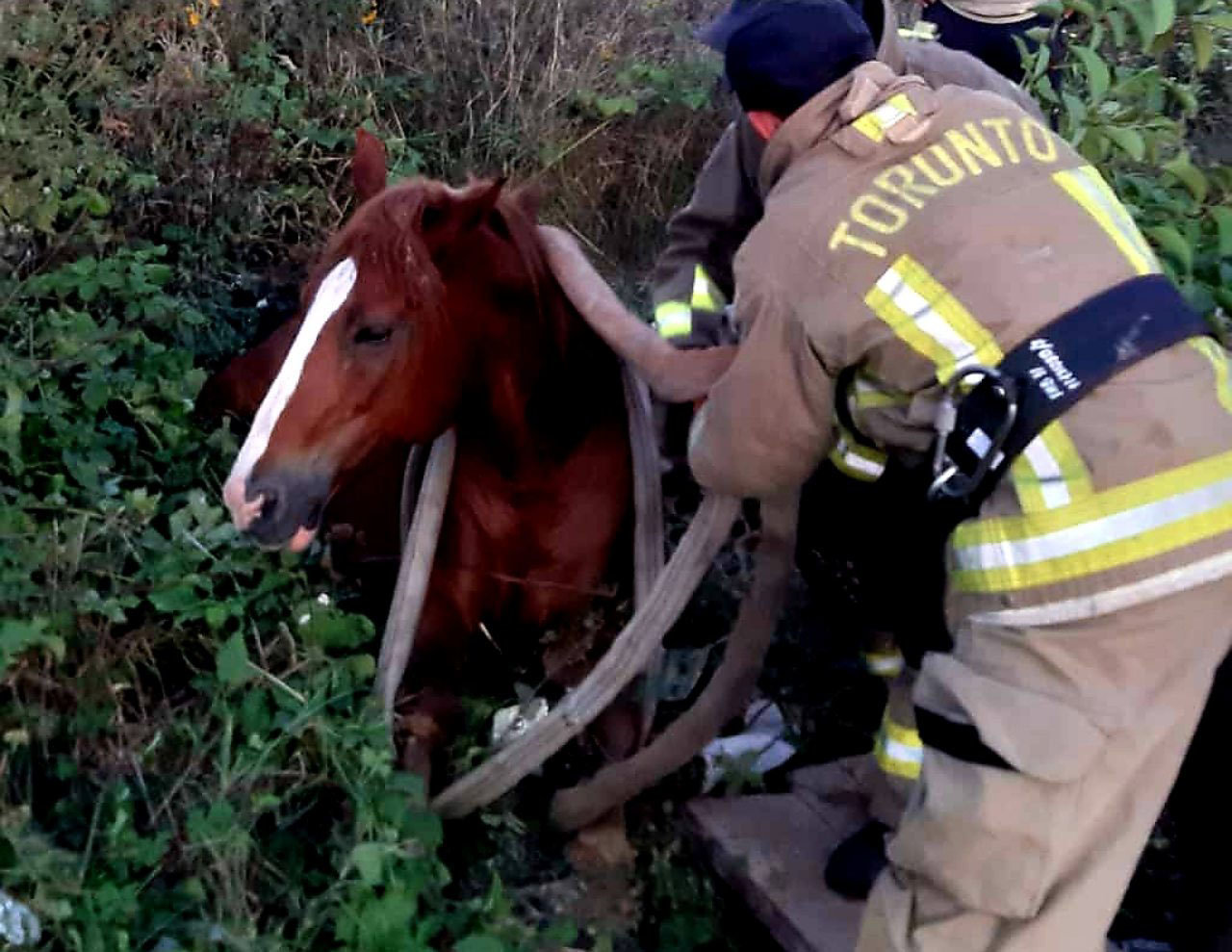 Ужгородські рятувальники витягли коня, який попав в 3-метрову «пастку» (ФОТО), фото-1