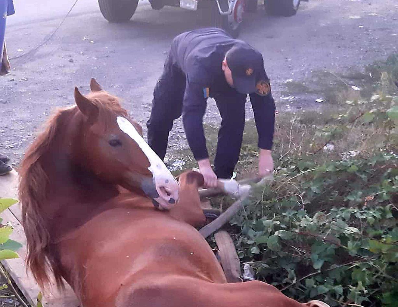 Ужгородські рятувальники витягли коня, який попав в 3-метрову «пастку» (ФОТО), фото-2