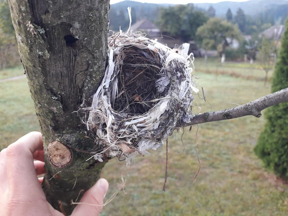 """Екологічна катастрофа """"на носі"""": На Закарпатті птах звив гніздо із поліетиленовими відходами (ФОТО), фото-2"""
