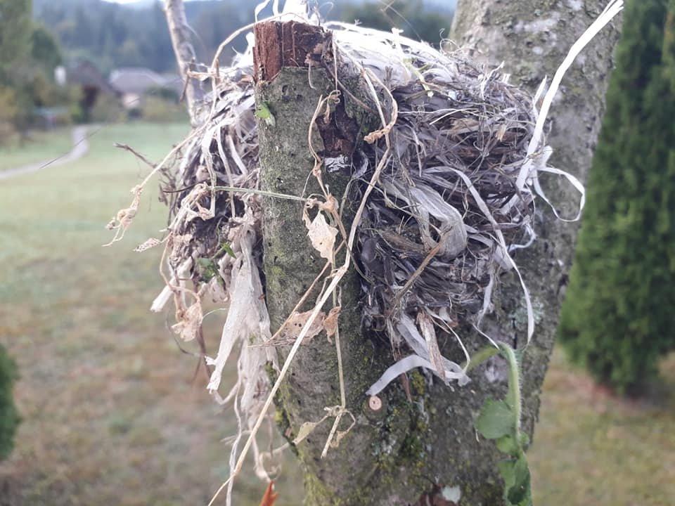 """Екологічна катастрофа """"на носі"""": На Закарпатті птах звив гніздо із поліетиленовими відходами (ФОТО), фото-1"""