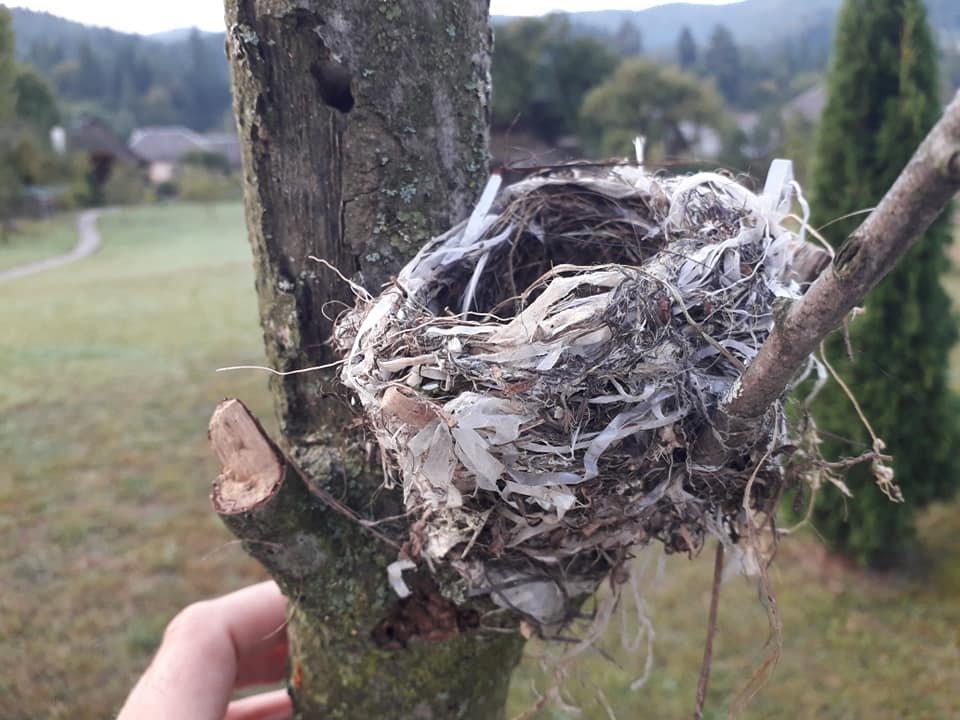 """Екологічна катастрофа """"на носі"""": На Закарпатті птах звив гніздо із поліетиленовими відходами (ФОТО), фото-3"""