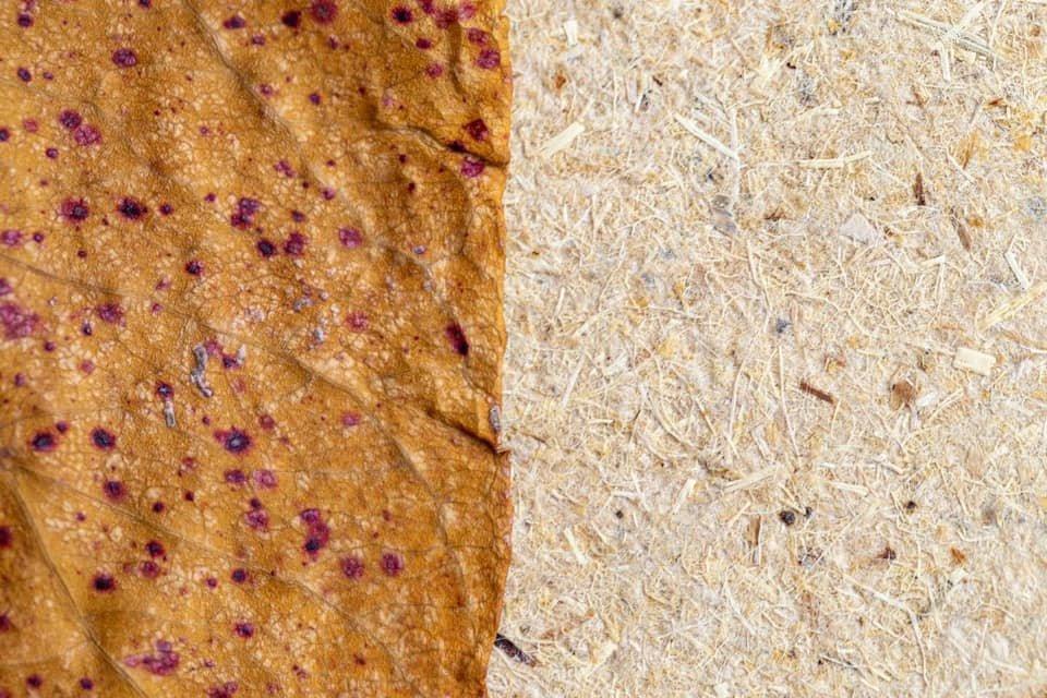 Винахідник із Закарпаття показав, як виглядає папір з опалого листя та розповів про його переваги (ФОТО), фото-4
