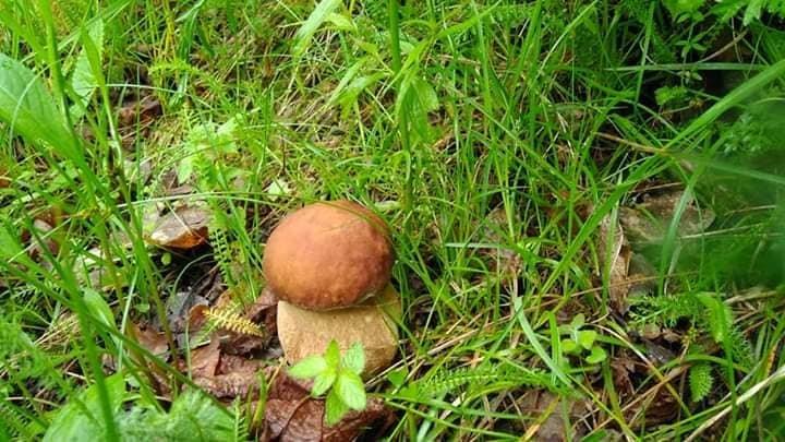 Осіннє полювання: закарпатці поділились грибними трофеями у мережі (ФОТО), фото-3