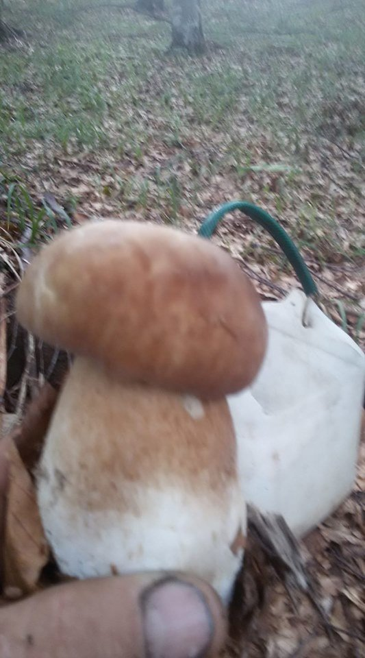 Осіннє полювання: закарпатці поділились грибними трофеями у мережі (ФОТО), фото-14