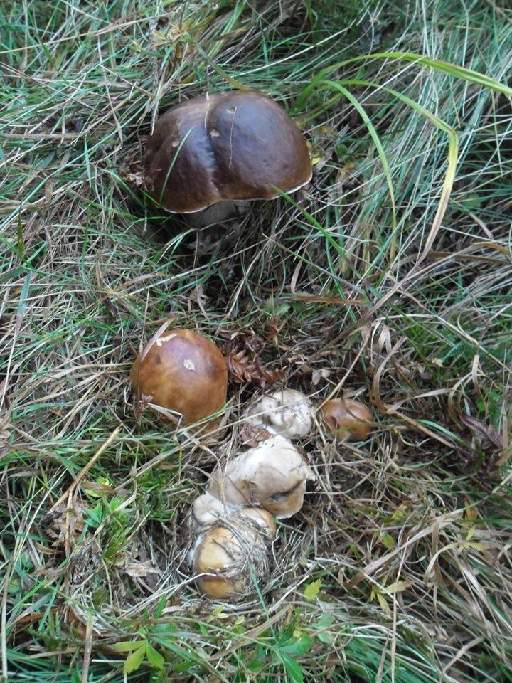 Осіннє полювання: закарпатці поділились грибними трофеями у мережі (ФОТО), фото-7
