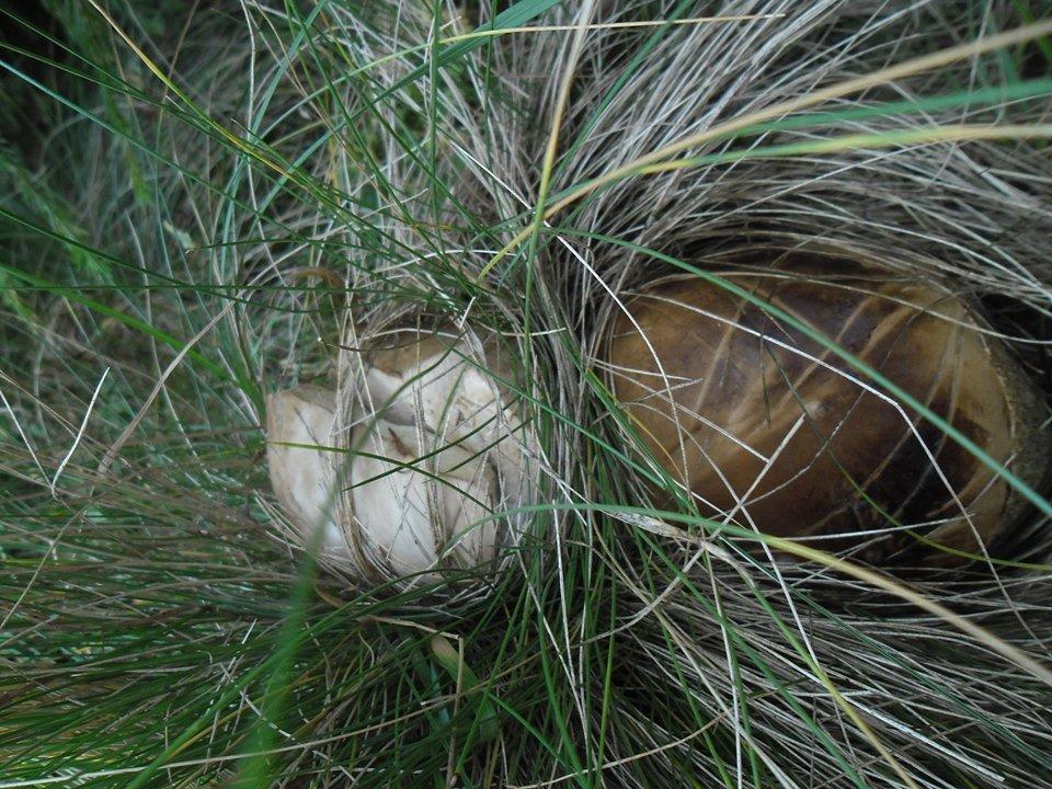Осіннє полювання: закарпатці поділились грибними трофеями у мережі (ФОТО), фото-6