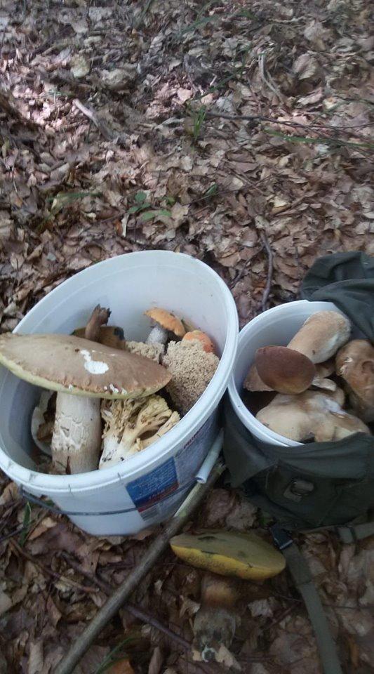 Осіннє полювання: закарпатці поділились грибними трофеями у мережі (ФОТО), фото-15