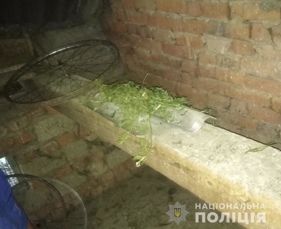 Закарпатські правоохоронці у неповнолітнього вилучили марихуану (ФОТО), фото-1