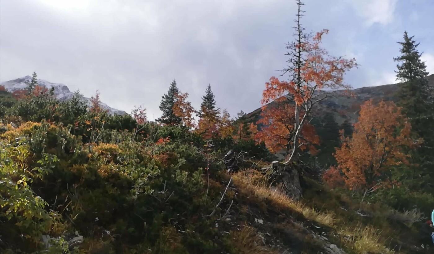 Зустріч осені із зимою: У словацьких Татрах випав перший сніг (ФОТО), фото-4