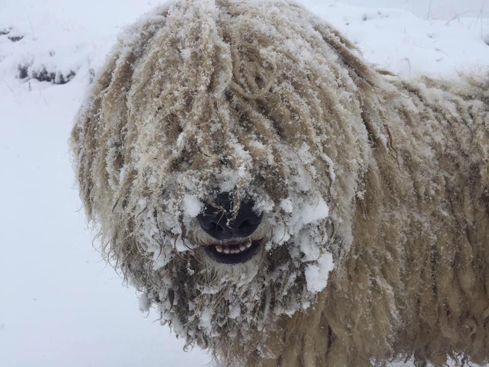 Зима прийшла: Українські Карпати та гірськолижні курорти вкрило снігом (ФОТО, ВІДЕО), фото-1