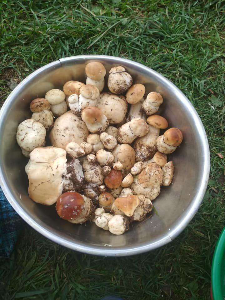 """На Закарпатті - грибне """"нашестя"""" - соцмережі заполонили фото та відео грибних врожаїв закарпатців, фото-16"""