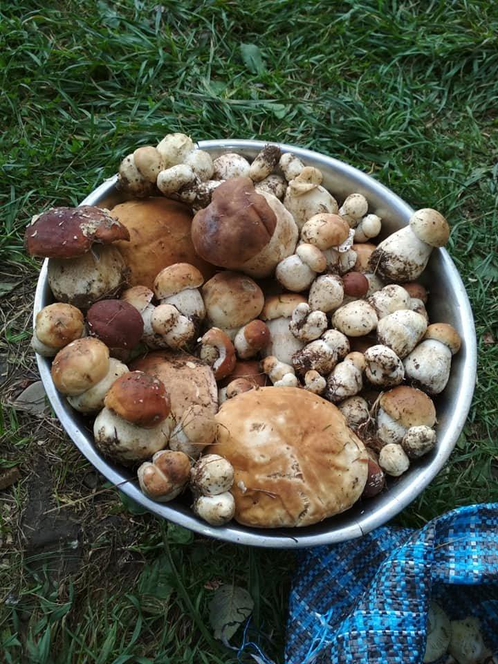 """На Закарпатті - грибне """"нашестя"""" - соцмережі заполонили фото та відео грибних врожаїв закарпатців, фото-15"""
