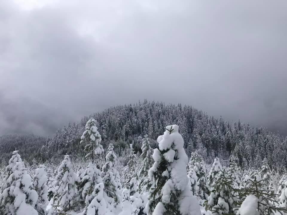 У мережі показали засніжені краєвиди Синевиру на висоті понад 1400 метрів (ФОТО), фото-4