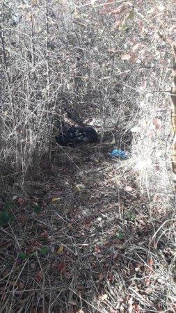 Ймовірно стало зле: поліція з'ясовує причину смерті закарпатця, тіло якого знайшли очевидці, фото-1