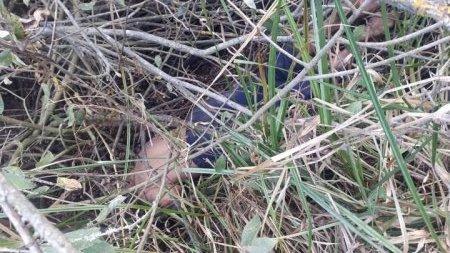 Ймовірно стало зле: поліція з'ясовує причину смерті закарпатця, тіло якого знайшли очевидці, фото-2