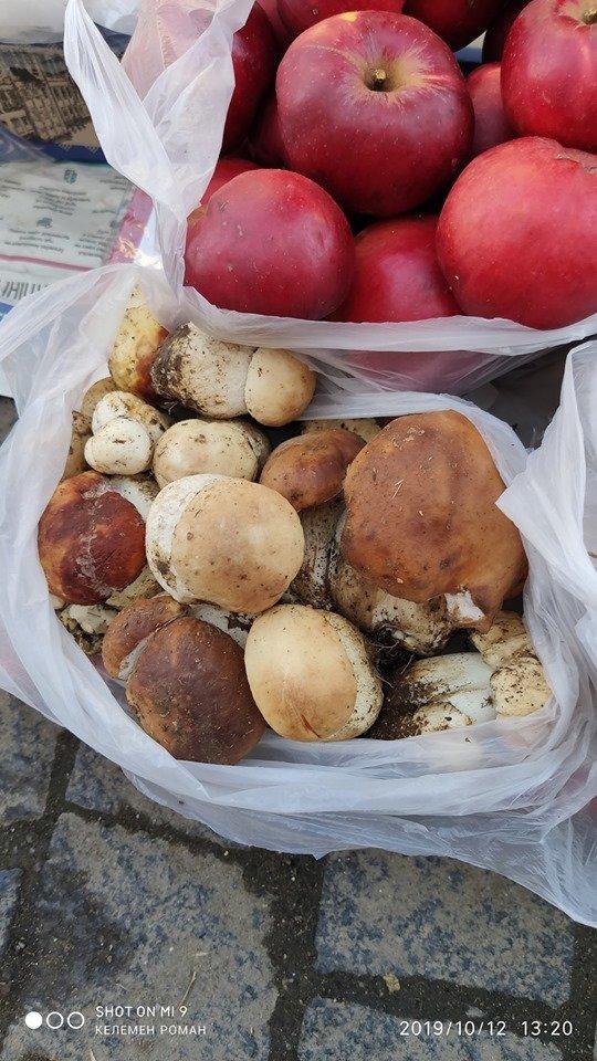 Лісові рекордсмени: На Закарпатті виріс гриб вагою понад 1 кг (ФОТО), фото-2