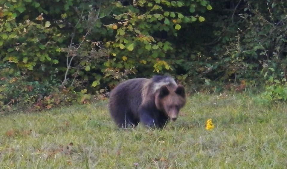 Несподівана зустріч: закарпатець в Ужанському парку зустрів ведмедицю з малюками (ФОТО), фото-2