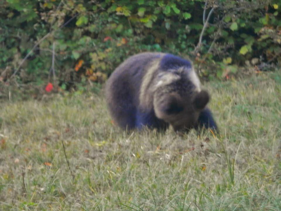 Несподівана зустріч: закарпатець в Ужанському парку зустрів ведмедицю з малюками (ФОТО), фото-3