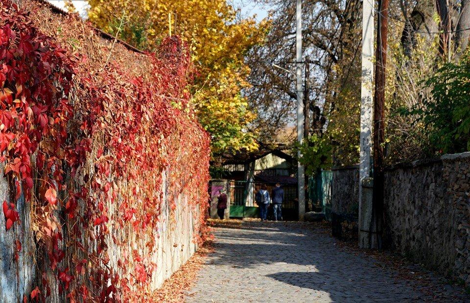 Ужгород в кольорах: Найпопулярніші фотолокації на тлі золотої осені (ФОТО), фото-2