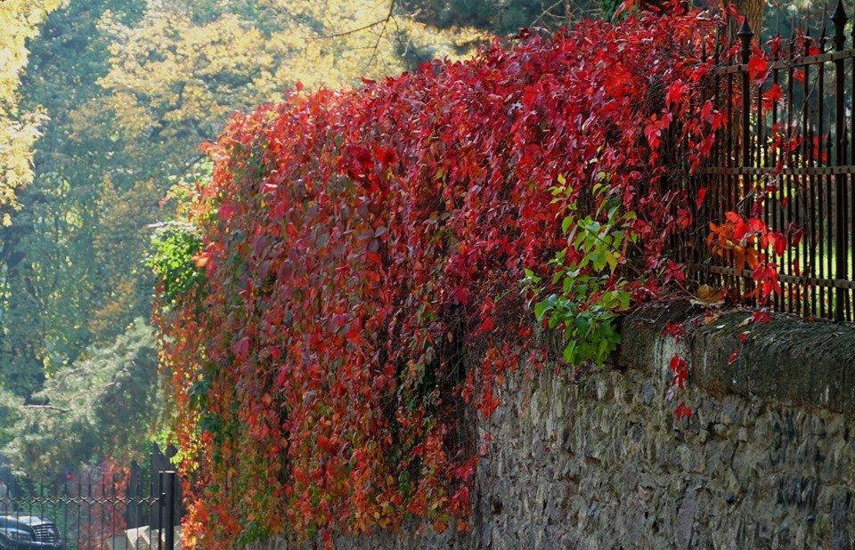 Ужгород в кольорах: Найпопулярніші фотолокації на тлі золотої осені (ФОТО), фото-3
