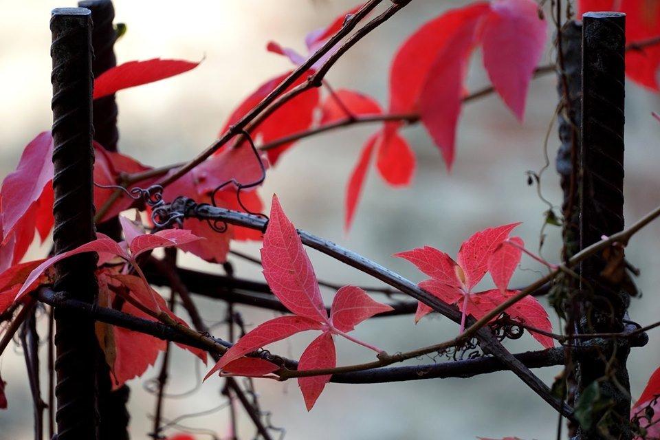 Ужгород в кольорах: Найпопулярніші фотолокації на тлі золотої осені (ФОТО), фото-6