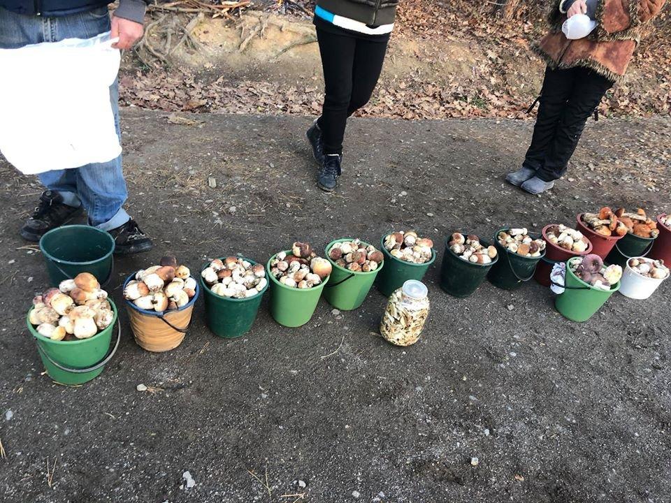 Сезон ще не завершений: закарпатці активно збирають та продають гриби (ФОТО), фото-5