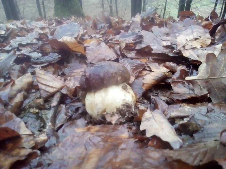 На календарі зима однак закарпатці продовжують збирати та продавати гриби (ФОТО), фото-1