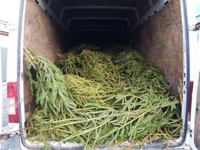 На Закарпатті поліцейські затримали два автобуси навантажені нелегальними ялинками (ФОТО), фото-3