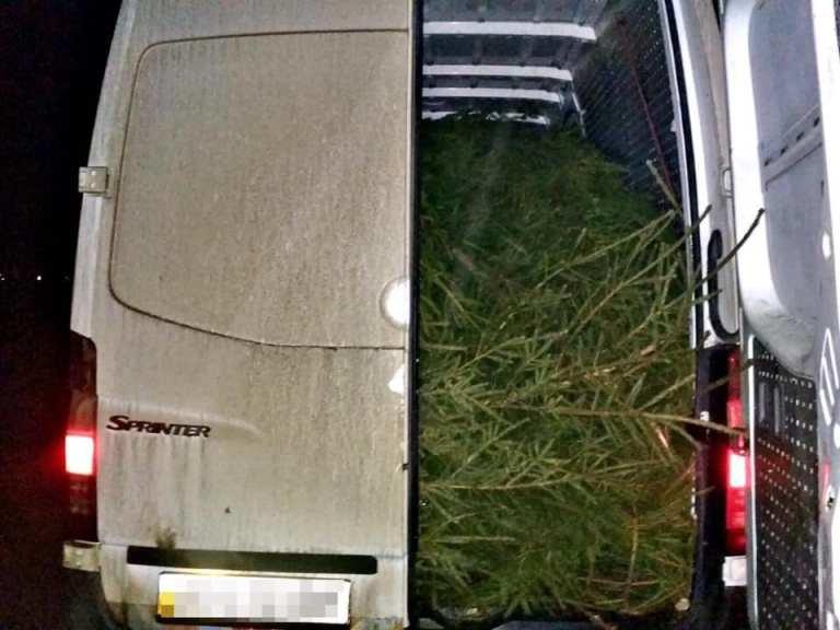 На Закарпатті поліцейські затримали два автобуси навантажені нелегальними ялинками (ФОТО), фото-2