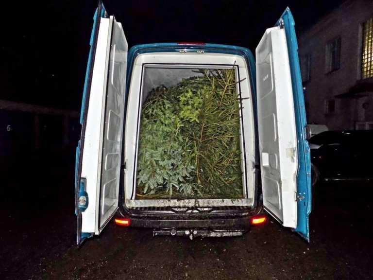 На Закарпатті поліцейські затримали два автобуси навантажені нелегальними ялинками (ФОТО), фото-1