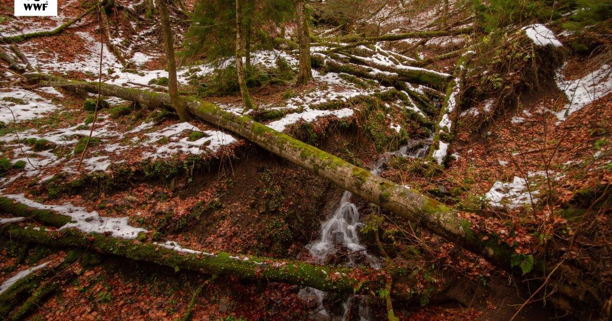 Праліси Карпат отримають особливий статус пам'яток природи? (ФОТО, ВІДЕО), фото-2