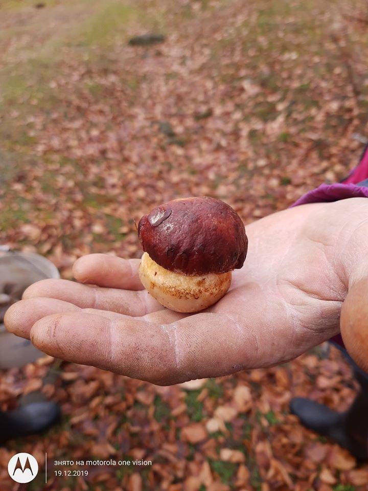 У День святого Миколая закарпатець знайшов у лісі гриби (ФОТО), фото-2