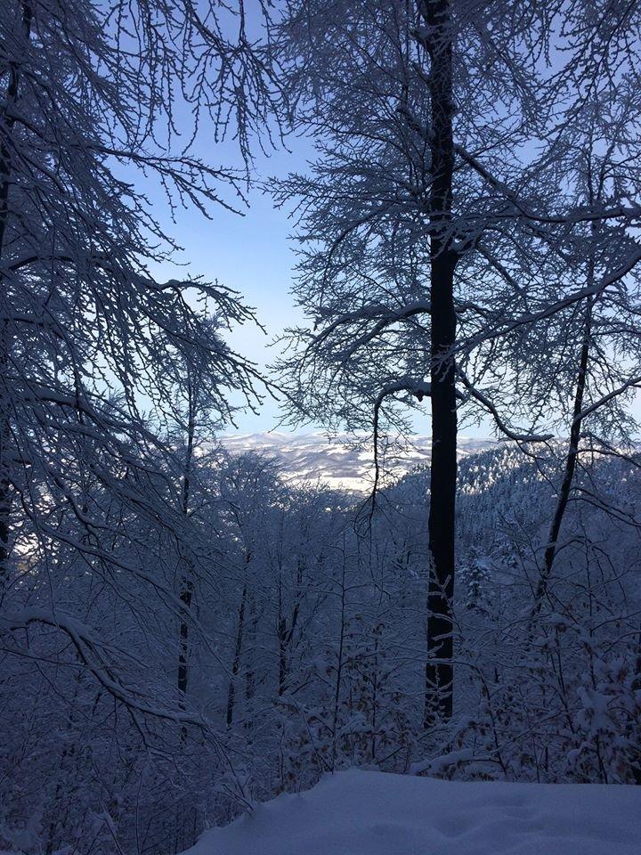 Фото дня: неймовірна зимова казка на Боржаві, фото-10