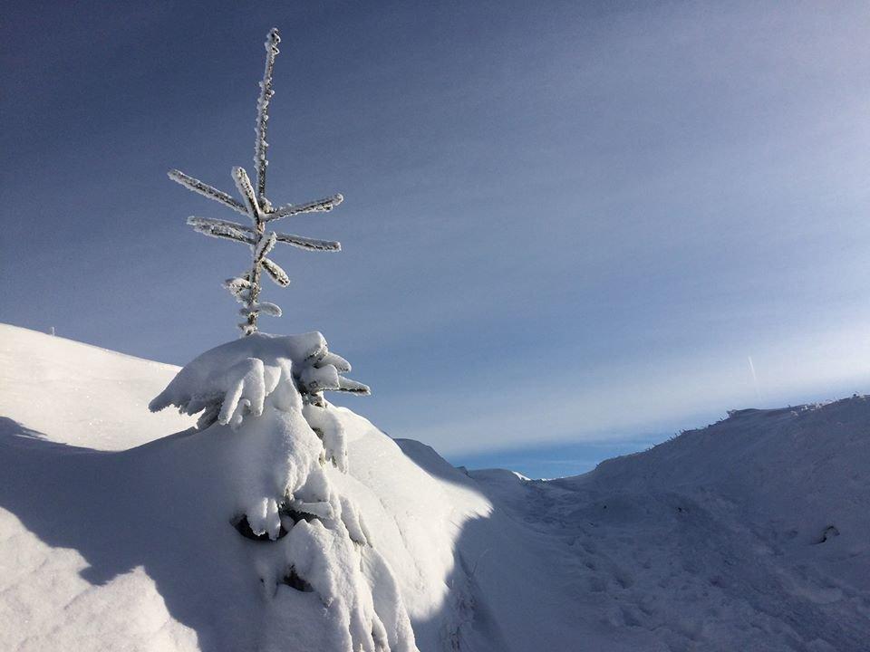 Фото дня: неймовірна зимова казка на Боржаві, фото-9