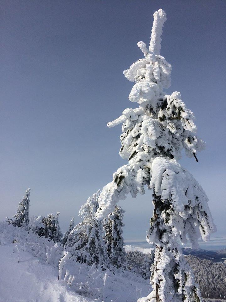 Фото дня: неймовірна зимова казка на Боржаві, фото-6