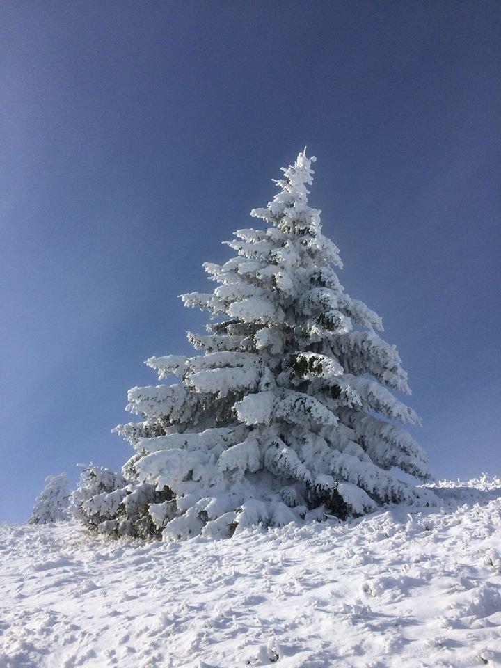 Фото дня: неймовірна зимова казка на Боржаві, фото-8