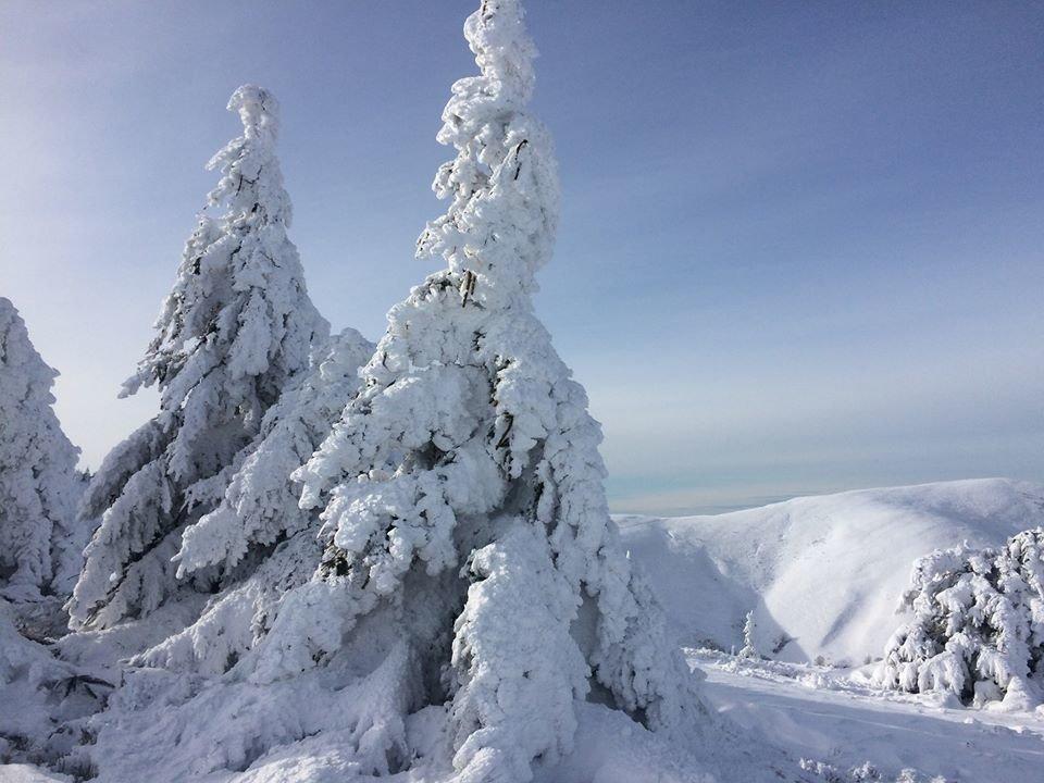 Фото дня: неймовірна зимова казка на Боржаві, фото-1