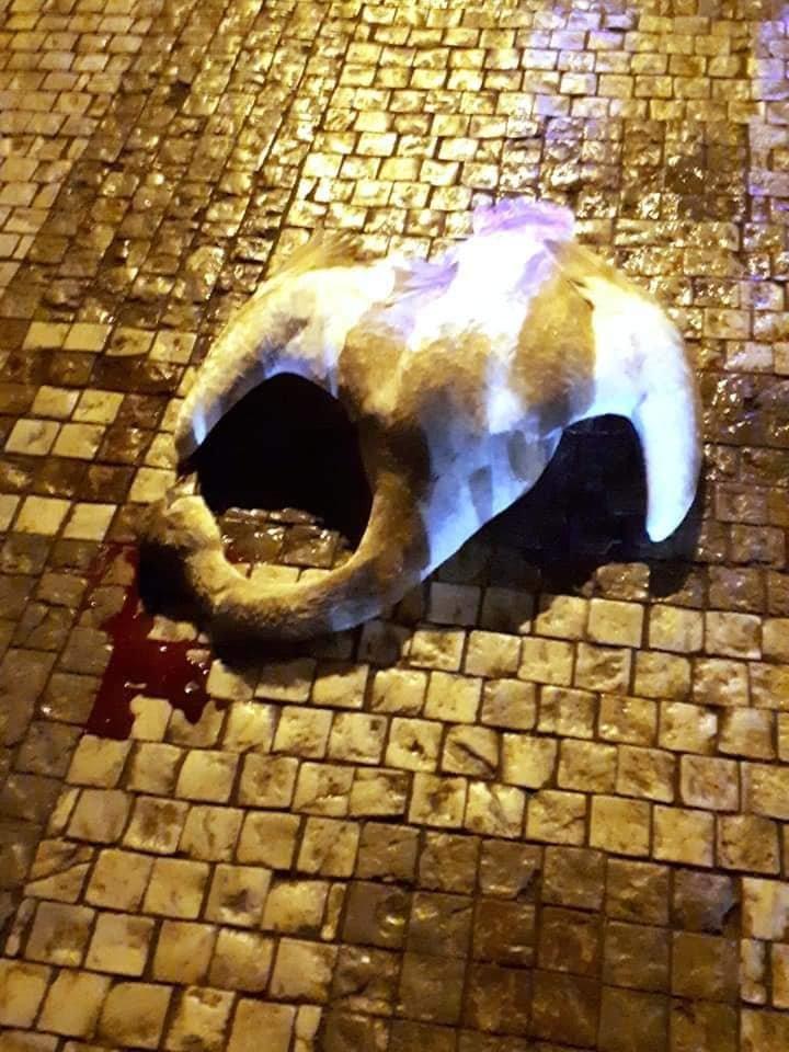 Трагічний Новий рік: через масові феєрверки у Празі постраждали лебеді (ФОТО18+, ВІДЕО), фото-2