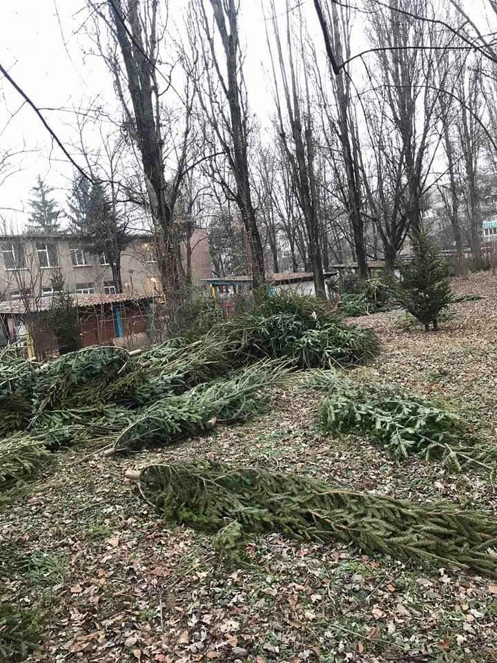 На вулицях Ужгорода з'явилися смітники з непроданих ялинок (ФОТОФАКТ), фото-1