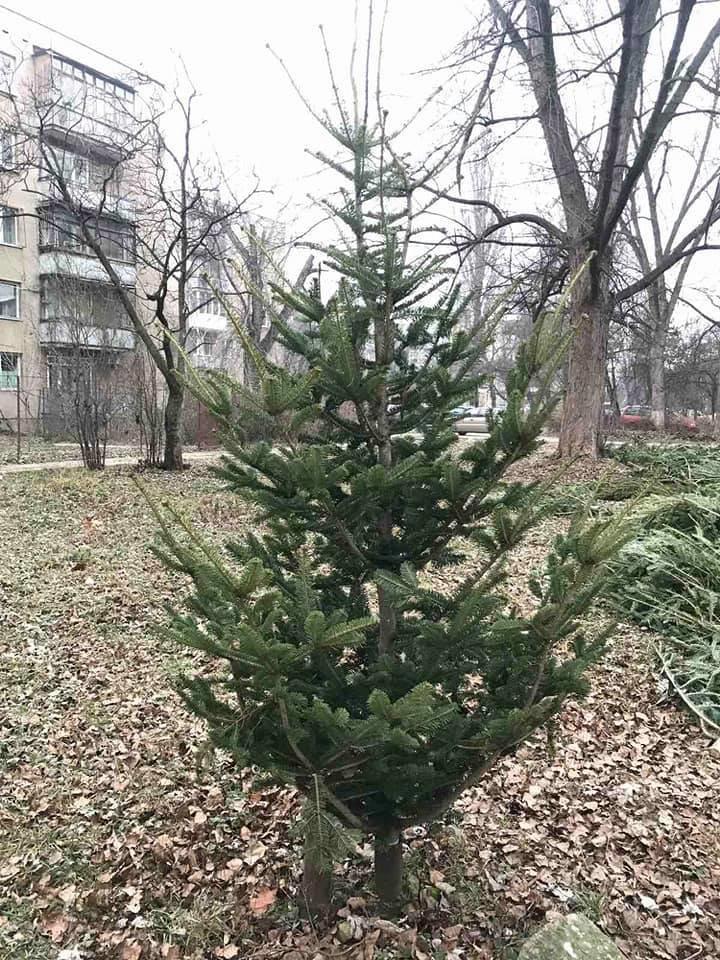 На вулицях Ужгорода з'явилися смітники з непроданих ялинок (ФОТОФАКТ), фото-3