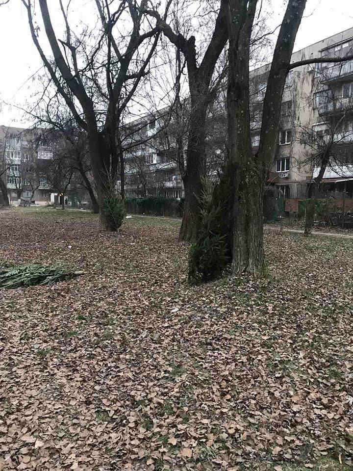 На вулицях Ужгорода з'явилися смітники з непроданих ялинок (ФОТОФАКТ), фото-4