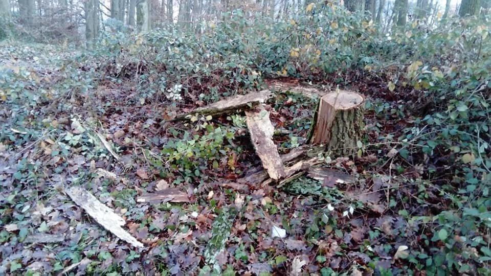 Ужгородці зафіксували вирубку дерев у мікрорайоні Шахта (ФОТОФАКТ), фото-1