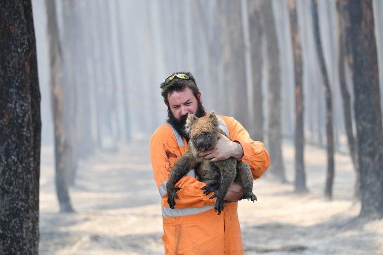 Від пожеж в Австралії загинуло понад мільярд тварин, – WWF, фото-1