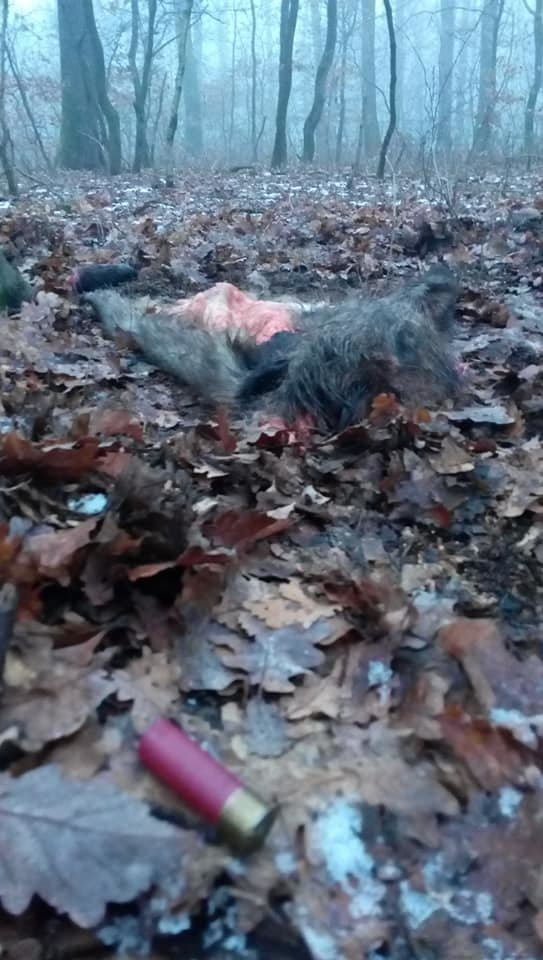 Жахливі знахідки: у лісопарку на Шахті жорстоко вбивають диких тварин? (ФОТО +18, ВІДЕО), фото-1