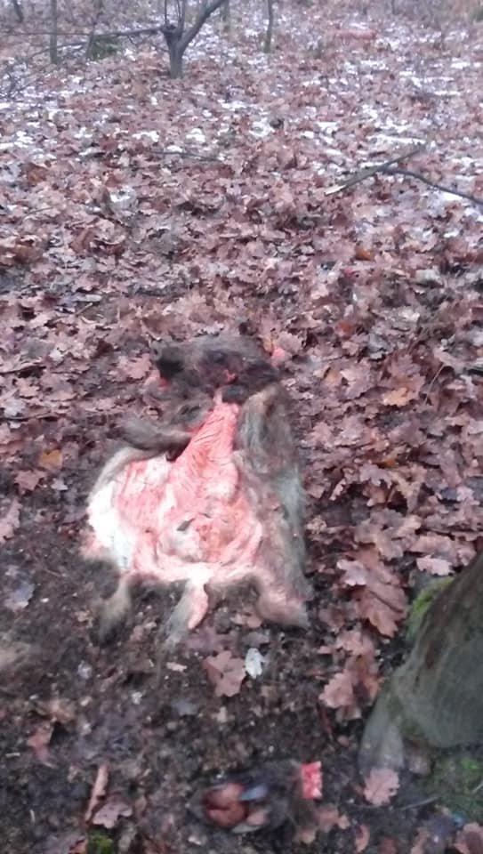 Жахливі знахідки: у лісопарку на Шахті жорстоко вбивають диких тварин? (ФОТО +18, ВІДЕО), фото-2